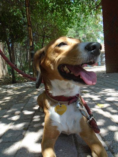 Σκύλο – σταθμός (βλ. παιδικός σταθμός) στην Αθήνα!