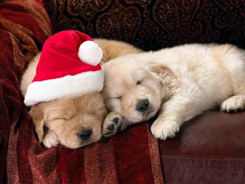 Cute_Christmas_dogs_Wallpaper__yvt2