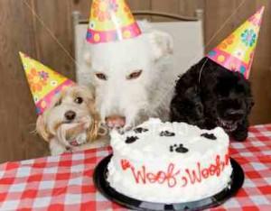 τούρτα γενεθλίων για σκύλους