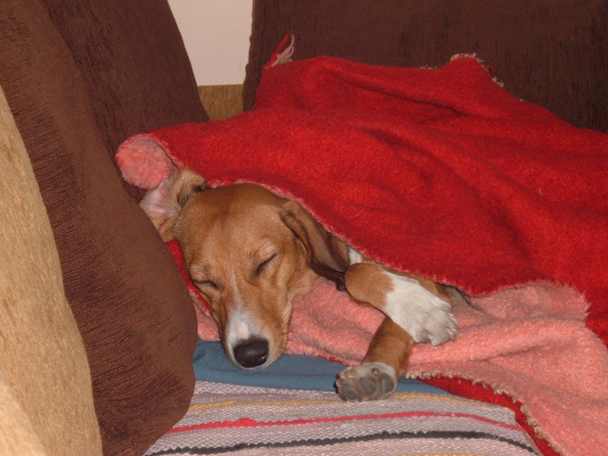 Εγώ ευτυχώς είμαι σκύλος του καναπέ, της αγκαλιάς, του παιχνιδιού και της μάσας...
