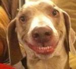 αστείος σκύλος