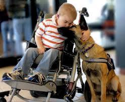 σκύλος θεραπευτής