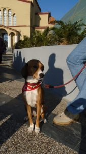 marsa posavac hound dog