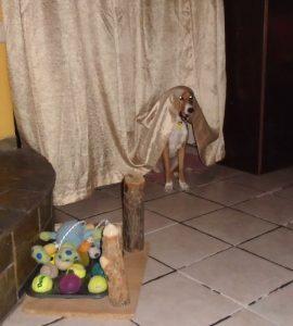 αστείο βίντεο με λιχούδη σκύλο