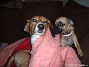 Τεστ γενικών γνώσεων για σκύλους