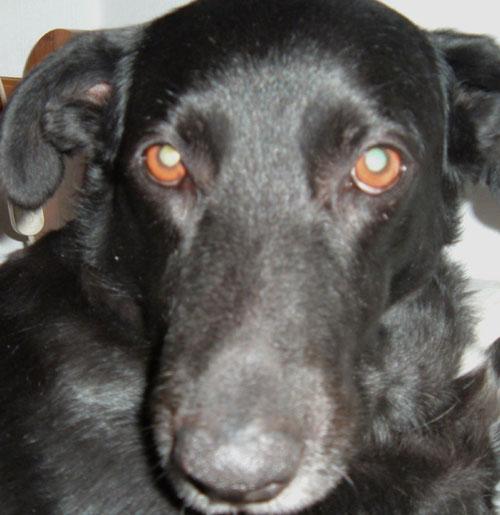 Η προσευχή ενός ηλικιωμένου αδέσποτου σκύλου