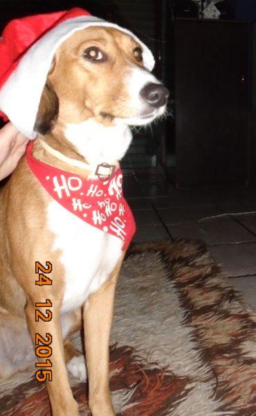 τραγούδι Χριστουγέννων με σκύλους