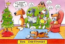dog christmas 1