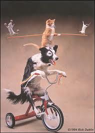 cats vs dogs vs mice