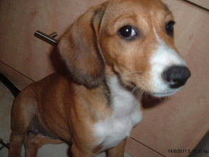 ποιες είναι οι αιτίες που προκαλούν στρες στον σκύλο σας