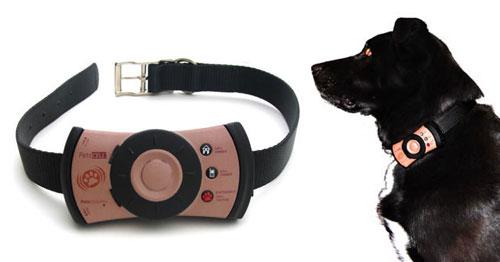 Dogcell! Το κινητό τηλέφωνο των σκύλων!