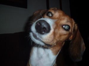 τα σκυλιά διαισθάνονται την στενοχώρια μας