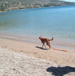 ασφάλεια στην παραλία για τους σκύλους