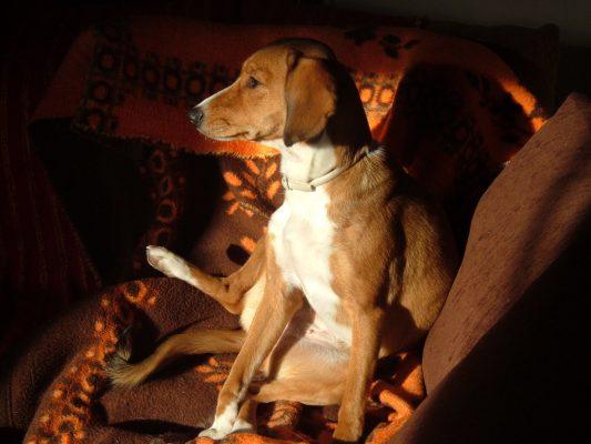 10 χρόνια νεότεροι οι ηλικιωμένοι ιδιοκτήτες σκύλων