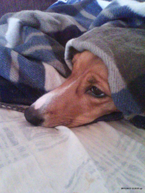Κρυώνουν τα σκυλιά;
