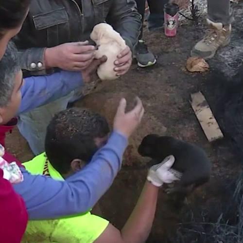 Μαμά σκυλίτσα σώζει τα κουτάβια της!