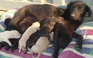 """Η μαμά """"Negrita"""" που σημαίνει """"Μαυρούλα"""" με τα 9 κουτάβια της!"""