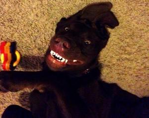 σκύλος χαμογελάει