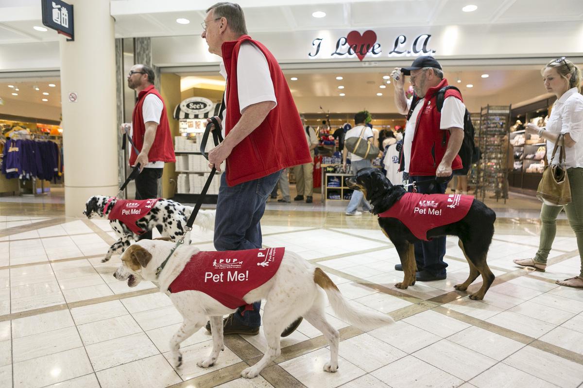 Υπάλληλοι σκύλοι στα αεροδρόμια της Αμερικής
