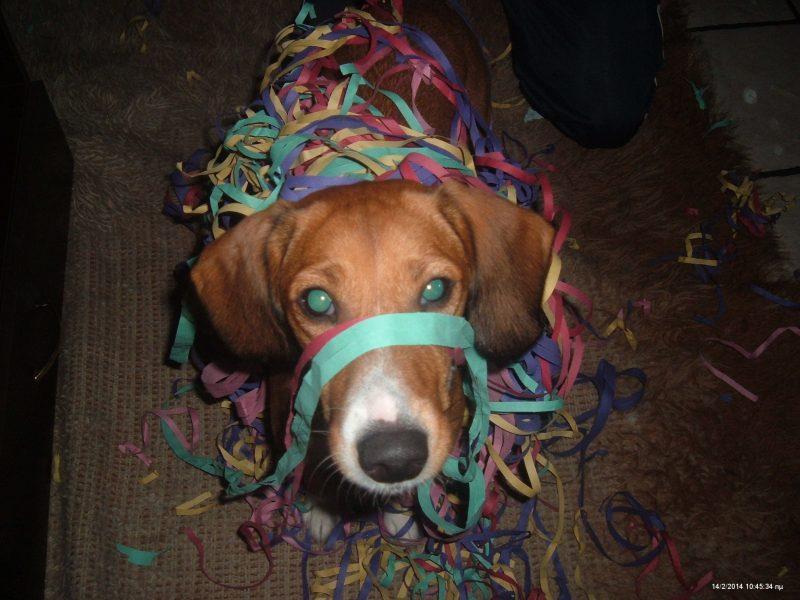 Τεστ γενικές γνώσεις για τους σκύλους