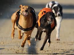 Η ταχύτητα του σκύλου