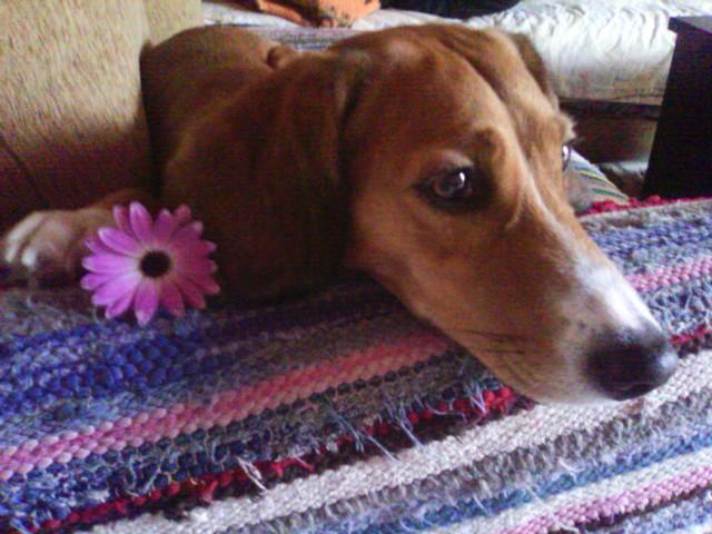 3 απλά πράγματα που θα επιμηκύνουν τη ζωή του σκύλου σας