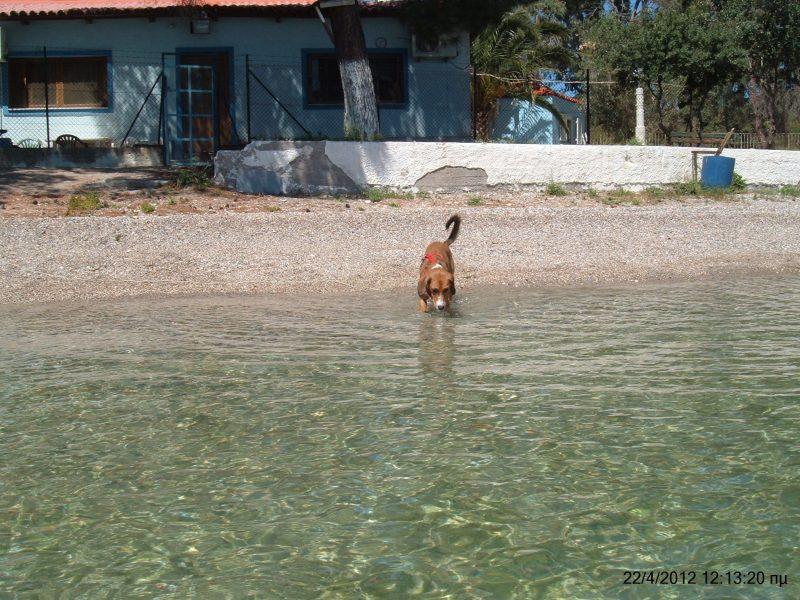 Pet friendly παραλίες!