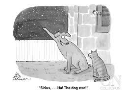Υπάρχει σκυλίσιος αστέρας;