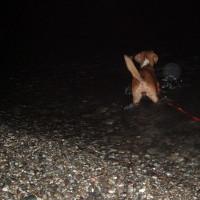 Πώς να μάθετε τον σκύλο σας να κολυμπάει