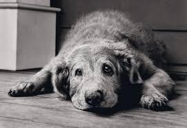 Και οι σκύλοι έχουν Alzheimer!