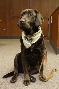 Amos, the canine advocate!