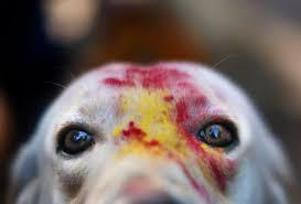 Ετήσιο φεστιβάλ γιορτάζει τους σκύλους!