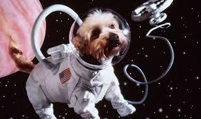 Σκυλιά στο διάστημα….