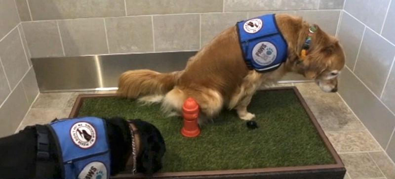 Έξυπνες εγκαταστάσεις για σκύλους στα αεροδρόμια
