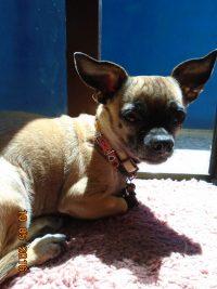 Γιατί οι σκύλοι λατρεύουν τον ήλιο;