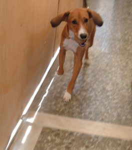η Μάρσα τρέχει με άλλον σκύλο