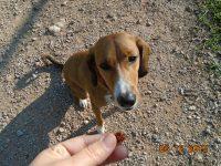 Φοβάται ο σκύλος σας τον κτηνίατρο; Υπάρχει τρόπος….