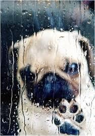 Γιατί δεν αρέσει στα σκυλιά η βροχή;