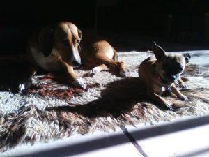 μικρόσωμα ή μεγαλόσωμα σκυλιά