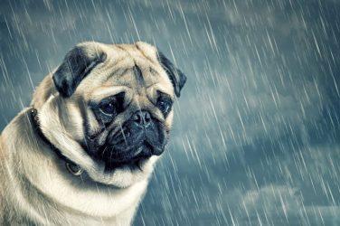 Γιατί τα σκυλιά δεν…. χωνεύουν την βροχή;
