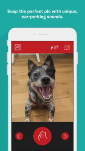 Χρήσιμες εφαρμογές σκύλων 3