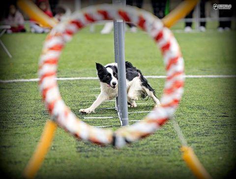 agility championship thraki