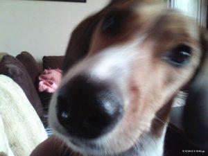 ένας έξυπνος σκύλος βίντεο