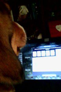 βίντεο με σκύλο φιλί της ζωής