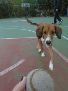 γυμναστική σκύλου