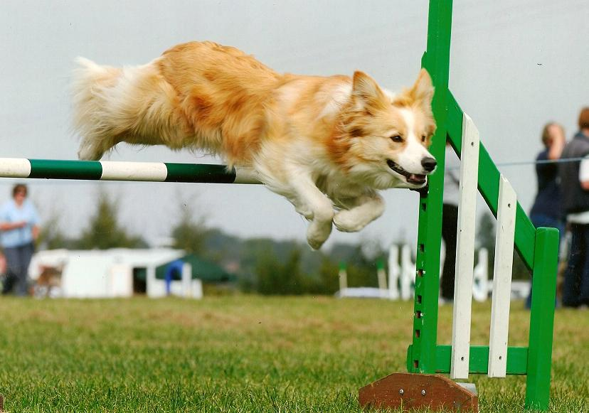 Νέα πάρκα agility στο Ίλιον