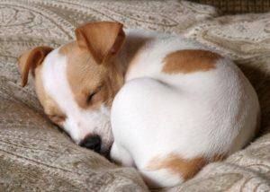 1 στάση ύπνου σκύλου