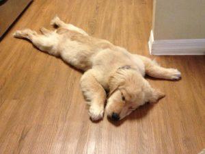 6 στάση ύπνου σκύλου