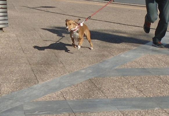 το τρέξιμο στους σκύλου