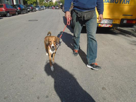σκύλος πάει βόλτα